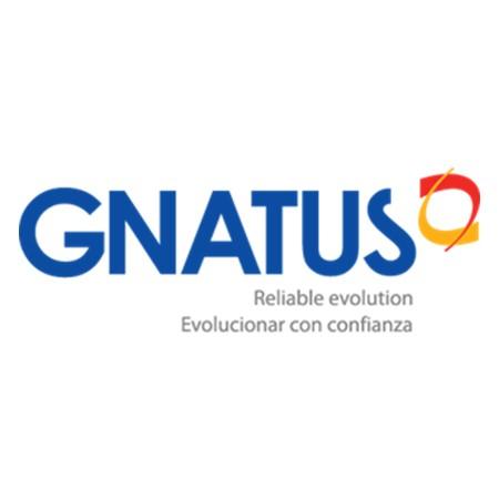 Gnatus International